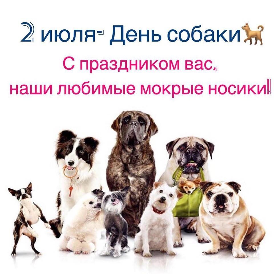 Международный день собак!