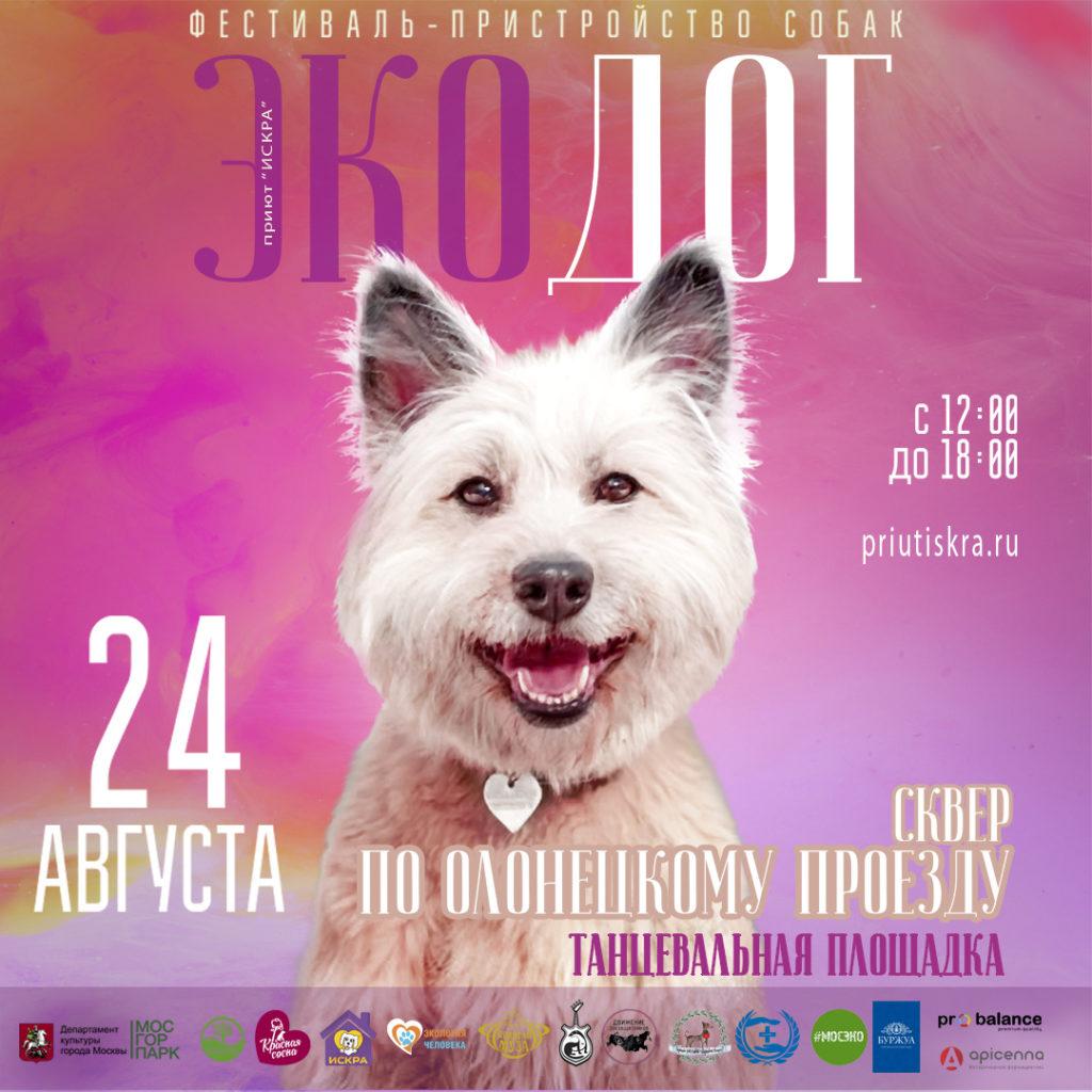 Фестиваль-пристройство собак