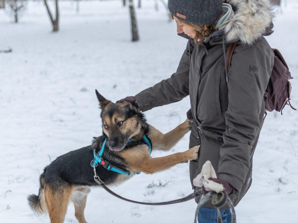 Куда можно временно пристроить животное, если вы нашли на улице?