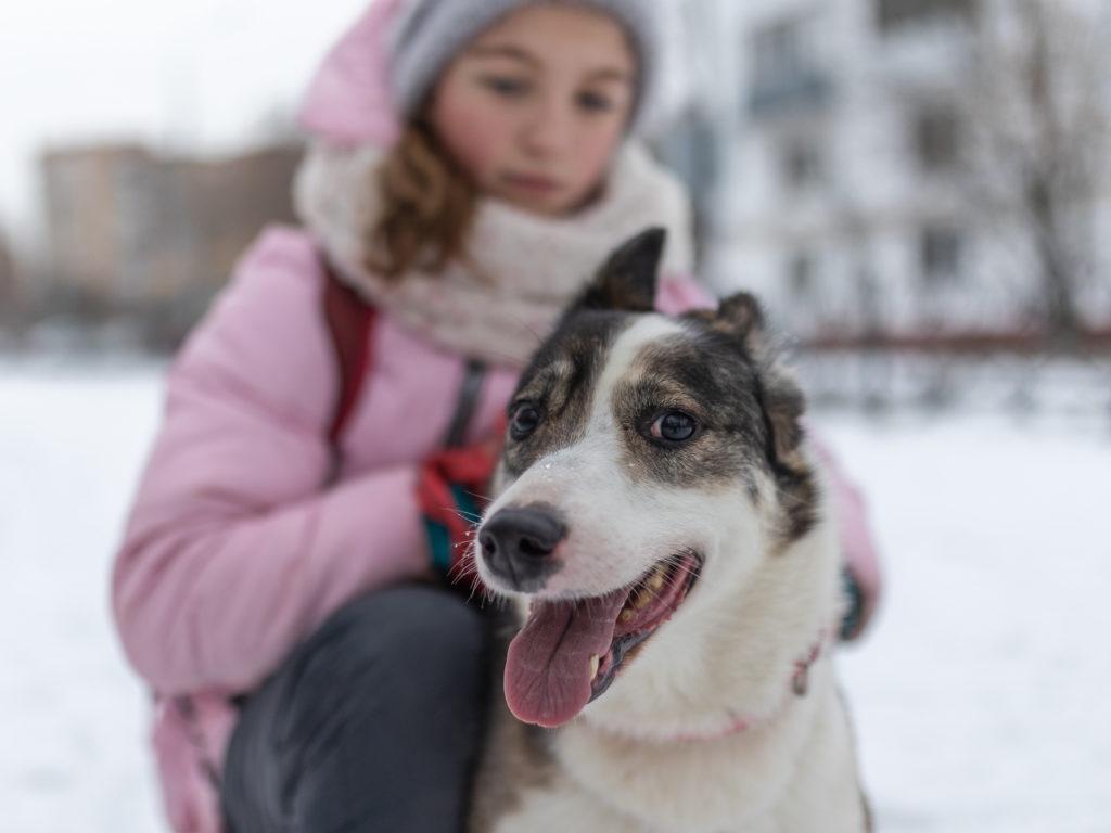Заводить ли собаку пожилым родителям?
