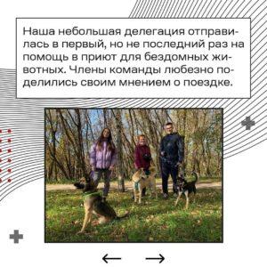 помочь собакам и планете